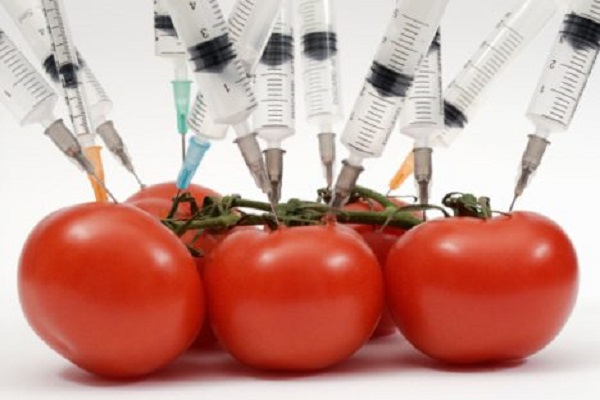 Wise Or Not For Genetically Altered Food